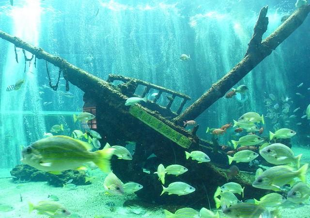まるでタイタニック!軍艦や沈没船が眠るミステリアスな海の世界